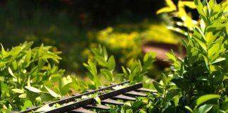 Przycinanie i pielęgnacja traw ozdobnych. Jaki sprzęt będzie najlepszy?